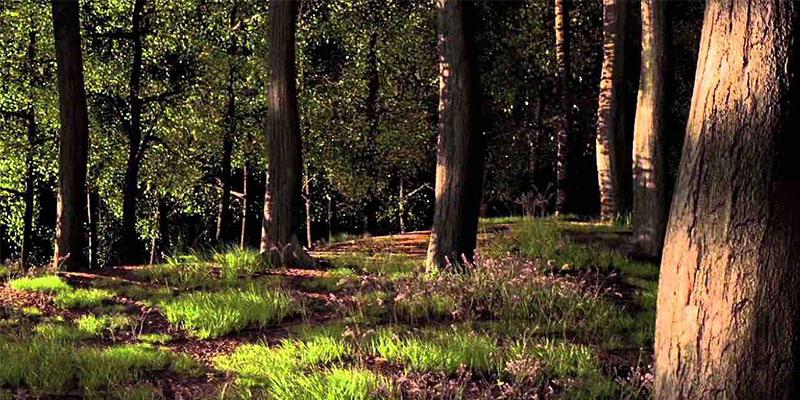 Empresas Forestales Comunitarias